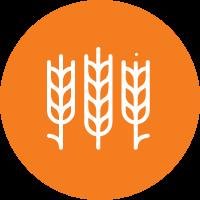 Tahıl Değirmenciliği Sistemleri